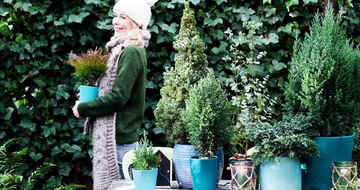 blauwe_coniferen_feat_tuinplantvandemaand-kopie.jpg