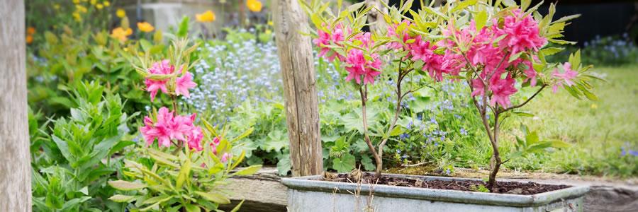 tuinplant_vd_maand-kopie.jpg