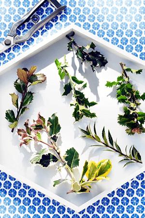 tuinplant_vd_maand_november_3