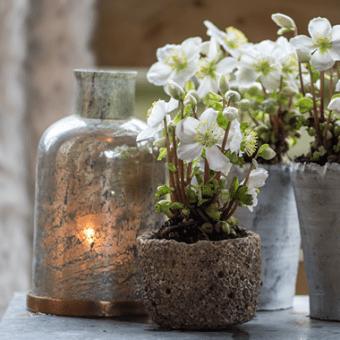 Tuinplant-van-de-maand-header