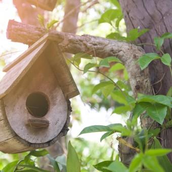 Wooden bird house on the tree